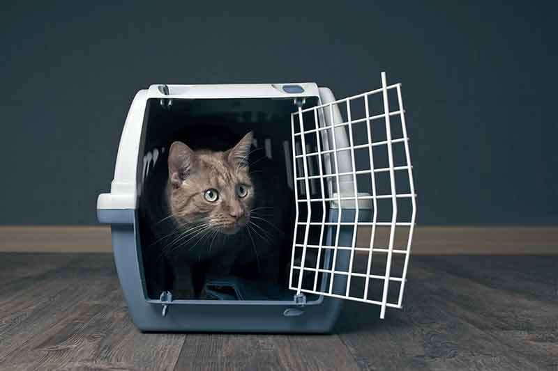 Getting your cat in the carrier is one of the hardest parts of cat health