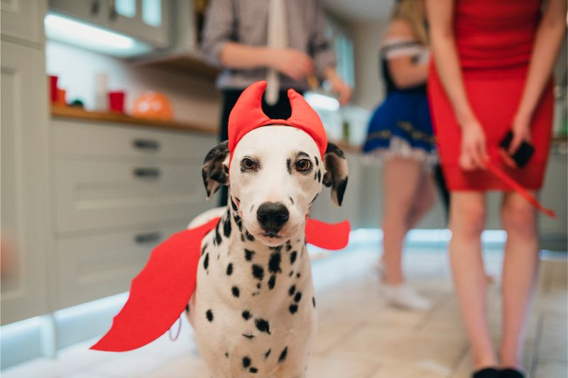 dog with costume