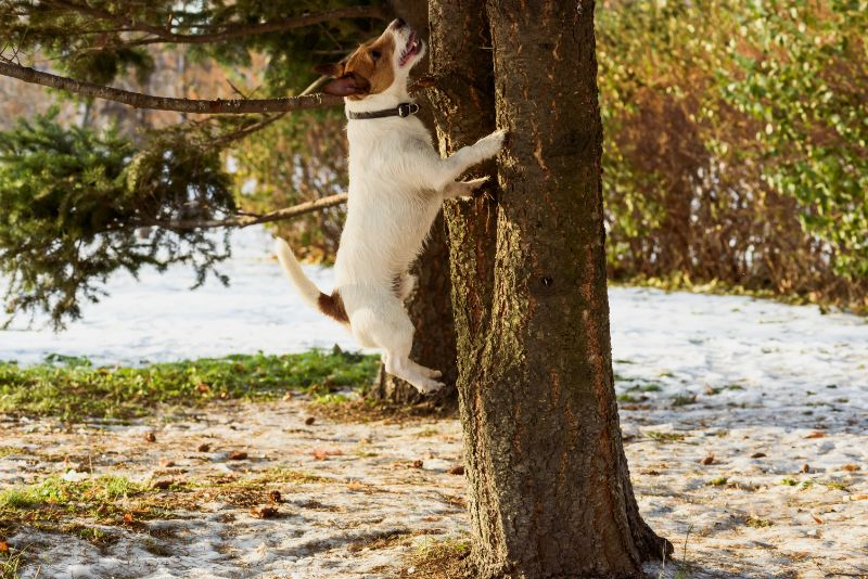 dog jumping tree in jacksonville